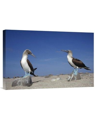 "East Urban Home 'Blue-Footed Booby Pair Galapagos Islands Ecuador' Photographic Print EAUB5213 Size: 16"" H x 24"" W Format: Wrapped Canvas"
