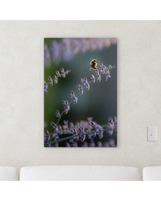 """Winston Porter 'The Little Animals (41)' Photographic Print on Canvas BF120529 Size: 30"""" H x 30"""" W x 2"""" D"""