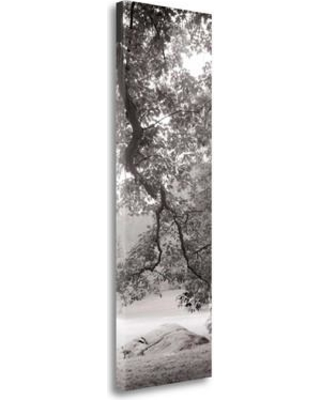 """Tangletown Fine Art 'Hampton Field Tree - 1' Photographic Print on Wrapped Canvas ICABITV174-1339c Size: 39"""" H x 13"""" W"""