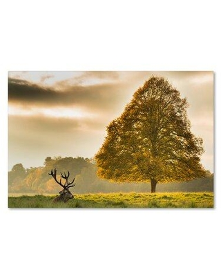 """Trademark Fine Art 'Appear' Photographic Print on Wrapped Canvas 1X03768-C Size: 30"""" H x 47"""" W"""
