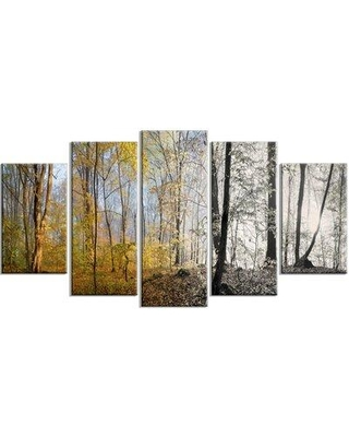 Design Art 'Yellow Morning in Forest Panorama' Photographic Print Multi-Piece Image on Canvas EAOU3772