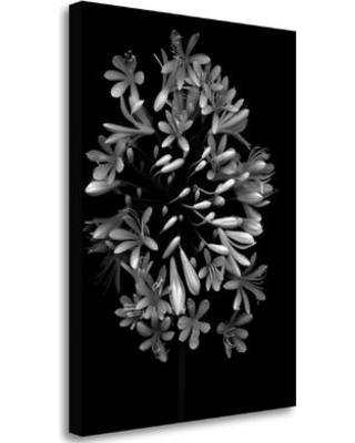 """Tangletown Fine Art 'Floral B-W - 28' Graphic Art Print on Wrapped Canvas ICABLF172A-1824c Size: 33"""" H x 25"""" W"""
