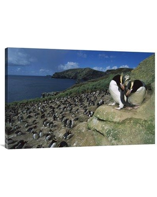 """East Urban Home 'Erect-Crested Penguines Overlooking Rookery Antipodes Island New Zealand' Photographic Print EAUB5306 Size: 24"""" H x 36"""" W Format: Wrapped Canvas"""
