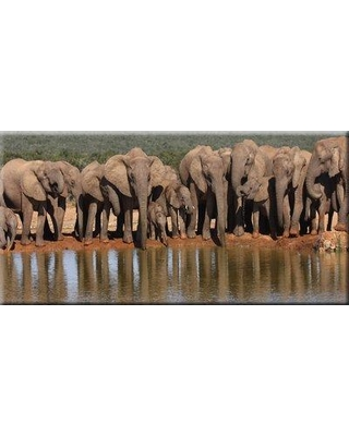 """World Menagerie Photographic Print on Wrapped Canvas BF094141 Size: 24"""" H x 48"""" W x 1"""" D"""