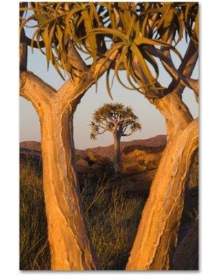 """Trademark Art 'Two Trees' Photographic Print on Wrapped Canvas ALI19000-C Size: 19"""" H x 12"""" W"""