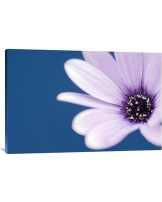 """East Urban Home 'Cape Marguerite Daisy' Photographic Print EAAC8536 Size: 24"""" H x 36"""" W Format: Wrapped Canvas"""