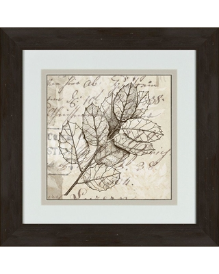 """Ptm Images 17 in. x 17 in. """"Sophisticated Botany B"""" Framed Wall Art, Other"""