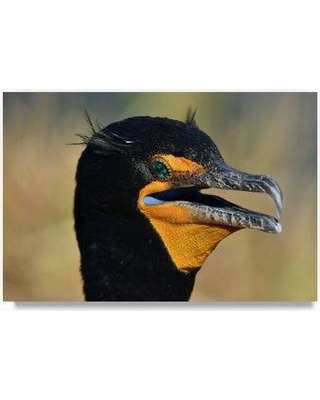 """Trademark Art 'Double Crested Cormorant' Photographic Print on Wrapped Canvas ALI23372-C Size: 16"""" H x 24"""" W x 2"""" D"""