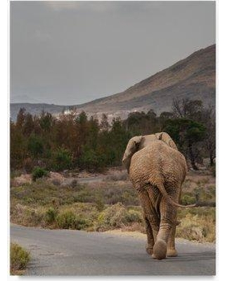 """Trademark Art 'Elephant on the Road' Photographic Print on Wrapped Canvas TS00054-C Size: 19"""" H x 14"""" W"""