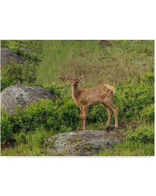 """Trademark Art 'Elk Calf' Photographic Print on Wrapped Canvas ALI34906-CGG Size: 18"""" H x 24"""" W x 2"""" D"""