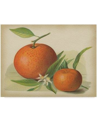 """August Grove 'Orange Study II' Graphic Art Print on Wrapped Canvas AUGV1825 Size: 35"""" H x 47"""" W x 2"""" D"""
