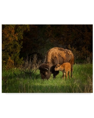 Trademark Fine Art 'Bison Cow And Calf' Canvas Art by Galloimages Online