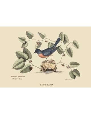 Shop Deals For Buyenlarge Blue Bird By Catesby Catesby Graphic Art Print In Brown Blue Green Size 24 H X 36 W X 1 5 D Wayfair 0 587 30636 Xc2436