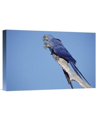 """East Urban Home 'Hyacinth Macaw Pair in Tree Pantanal Brazil' Photographic Print EAUB5512 Size: 12"""" H x 18"""" W Format: Wrapped Canvas"""