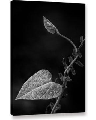"""Ebern Designs 'Fuzzy Leaf' Photographic Print on Canvas BF186606 Format: Wrapped Canvas Size: 24"""" H x 16"""" W x 1.5"""" D"""