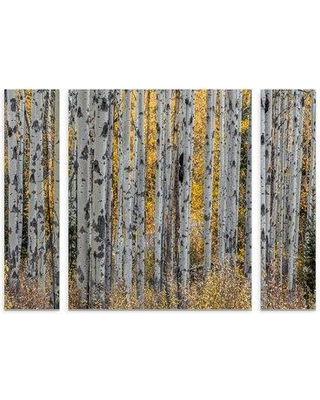 """East Urban Home 'Aspen Trees' Photographic Print Multi-Piece Image on Wrapped Canvas W001125433 Size: 30"""" H x 41"""" W x 2"""" D"""