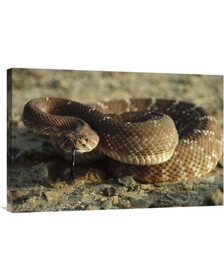"""East Urban Home 'Red Rattlesnake Baja California Mexico' Photographic Print EAAC8593 Size: 20"""" H x 30"""" W Format: Wrapped Canvas"""