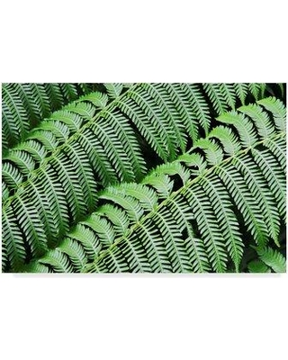 "Ebern Designs 'Green Fern' Photographic Print on Wrapped Canvas EBRN1163 Size: 16"" H x 24"" W x 2"" D"
