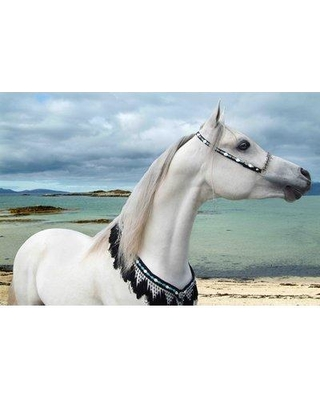"""Marmont Hill 'Arabian Sea' by Maggie Dee Painting Print on Wrapped Canvas ET-MHMWWMAD-09-C- Size: 40"""" H x 60"""" W"""