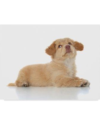 """Trademark Art 'Sitting Puppy' Photographic Print on Wrapped Canvas ALI24547-CGG Size: 18"""" H x 24"""" W"""