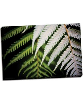 Bay Isle Home 'Silver Tree Fern I' Photographic Print on Wrapped Canvas BI051123