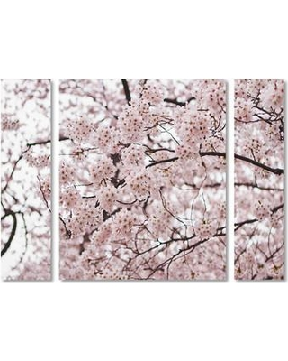 "Trademark Art 'Cherry Blossoms' by Ariane Moshayedi 3 Piece Photographic Print on Wrapped Canvas Set AM0121-3PC-SET-LG / AM0121-3PC-SET-SM Size: 24"" H x 32"" W x 2"" D"