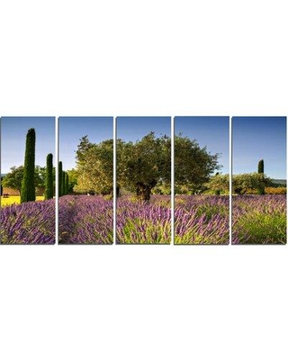 Design Art 'Beautiful Lavender and Olive Trees' 5 Piece Photographic Print on Wrapped Canvas Set PT12362-401