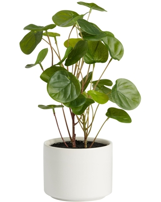Faux Chinese Money Plant in Ceramic Pot: Green/White by World Market