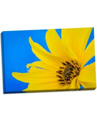 August Grove 'Sunflower on Blue III' Photographic Print on Wrapped Canvas BF053426