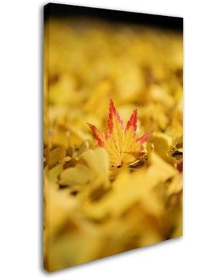 "Ebern Designs 'Falling Leaves' Photographic Print on Wrapped Canvas EBND8081 Size: 19"" H x 12"" W"