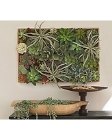 Succulent Wall, Large