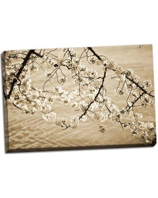 Bloomsbury Market 'Sepia Cherry Blossoms II' Photographic Print on Wrapped Canvas BI051810