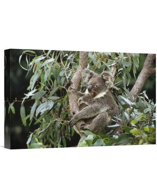 """East Urban Home 'Koala Mother and Three Month Old Joey Resting' Photographic Print on Wrapped Canvas NNAI1465 Size: 24"""" H x 36"""" W"""