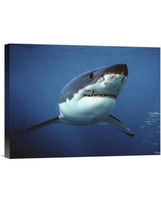 """East Urban Home 'Great White Shark Swimming Underwater Neptune Islands Australia Digitally Enhanced' Photographic Print EAAC8555 Size: 12"""" H x 16"""" W Format: Wrapped Canvas"""