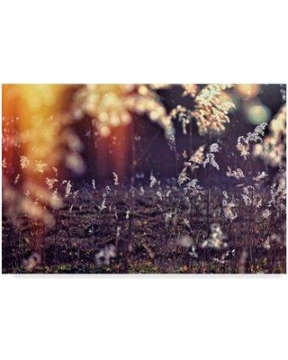 """Trademark Art 'White Floral' Photographic Print on Wrapped Canvas ALI36024-CGG Size: 12"""" H x 19"""" W x 2"""" D"""