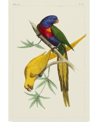 """Bay Isle Home 'Lemaire Parrots IV' Graphic Art Print on Wrapped Canvas BYIL5885 Size: 19"""" H x 12"""" W x 2"""" D"""