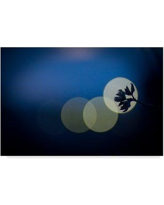 "Trademark Fine Art 'Hikari' Photographic Print on Wrapped Canvas 1X04999-CGG Size: 16"" H x 24"" W x 2"" D"