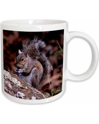 East Urban Home A Squirrel Enjoying His Meal a Squirrel Eating a Nut on top of a Rock Coffee Mug W000901593