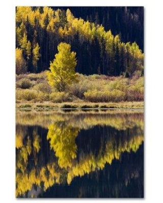 """Trademark Fine Art 'Forest Scene' Photographic Print on Wrapped Canvas ALI19157-C Size: 32"""" H x 22"""" W"""