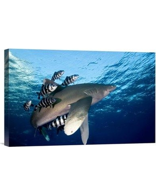 "East Urban Home 'Oceanic White-Tip Shark Close to the Surface' Photographic Print EAAC8529 Size: 12"" H x 18"" W Format: Wrapped Canvas"