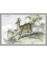 Check Out These Bargains On The Chamois By John Stewart Print Painting Buyenlarge
