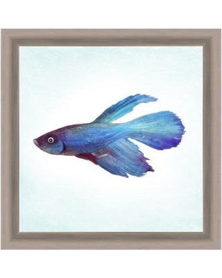 PTM Tropical Fish Giclee Framed Drawing Print 1-18338a
