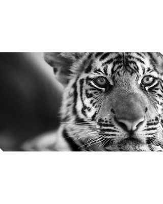 "World Menagerie 'Wild Cat' Photographic Print on Wrapped Canvas BI092328 Size: 36"" H x 60"" W x 1.5"" D"
