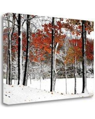 "Tangletown Fine Art 'SnowFall' Graphic Art Print on Wrapped Canvas CALBP102-2416c Size: 26"" H x 39"" W"