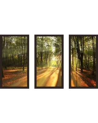 """PicturePerfectInternational """"Fall landscape trees"""" 3 Piece Framed Photographic Print Set 704-2544-1224 / 704-2544-1632 Size: 33.5"""" H x 52.5"""" W x 1"""" D"""