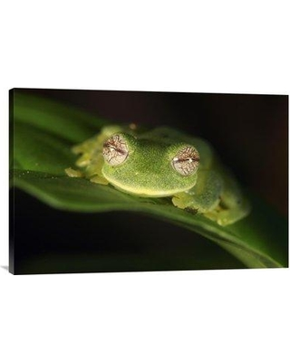 """East Urban Home 'Glass Frog Sierra Nevada De Santa Marta Colombia' Photographic Print EAAC7135 Size: 20"""" H x 30"""" W Format: Wrapped Canvas"""