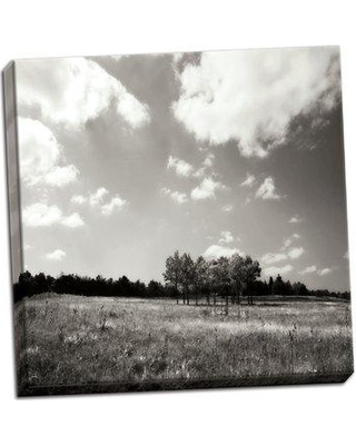 Millwood Pines 'Tree Line Sq. II' Photographic Print on Wrapped Canvas BI055758