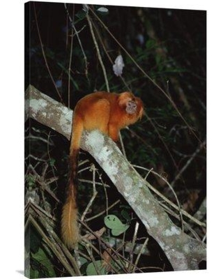 "East Urban Home 'Golden Lion Tamarin Poco Das Antas Reserve Atlantic Forest Brazil' Photographic Print EAUB5446 Size: 36"" H x 24"" W Format: Wrapped Canvas"