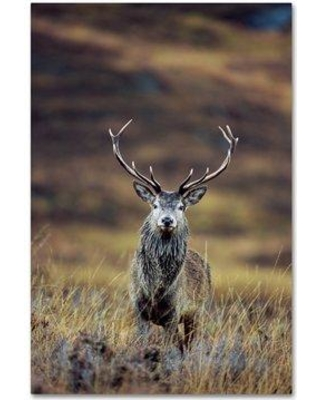 "Trademark Fine Art 'Deer' Photographic Print on Wrapped Canvas ALI18995-C Size: 19"" H x 12"" W"