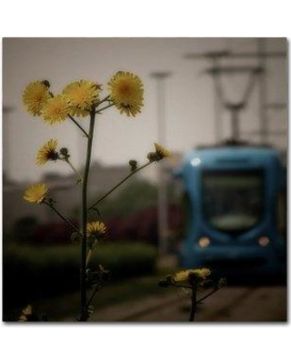 """Trademark Art 'Flora Urbanensis' Photographic Print on Wrapped Canvas 1X04299-C Size: 24"""" H x 24"""" W"""